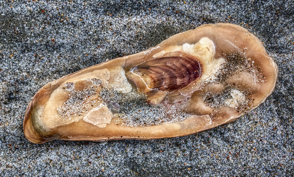 Shell by k9photo