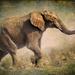 Elephant by ludwigsdiana