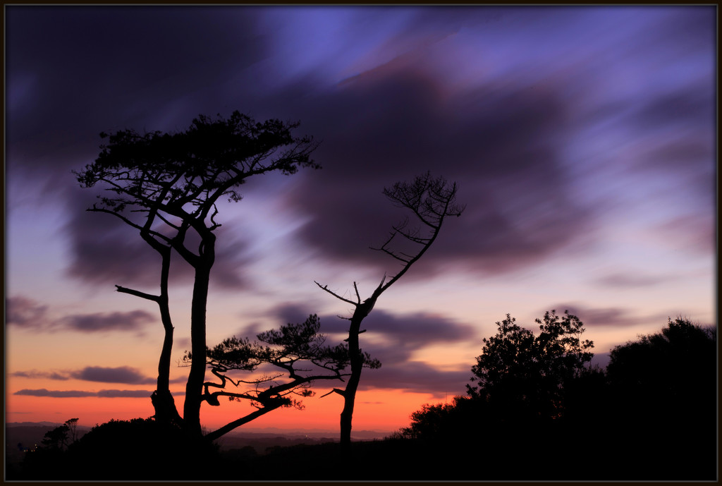 Those Trees by dide