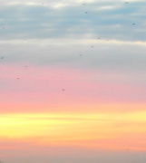 31st Jan 2020 - Early Morning Flight