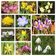 31st Jan 2020 - More than just snowdrops..................
