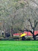 27th Jan 2020 - Yellow Umbrella