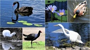 1st Feb 2020 -     Favourites From The Lake ~
