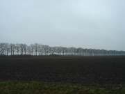1st Feb 2020 - an endless row of trees...