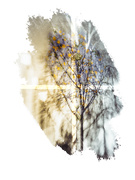 28th Jan 2020 - lemon tree