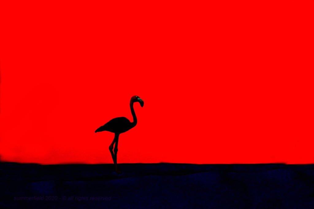 flamingo by summerfield