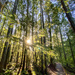 Moss in the Light by kwind