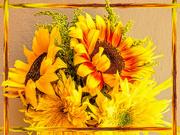 1st Feb 2020 - Sunflowers for Katrina