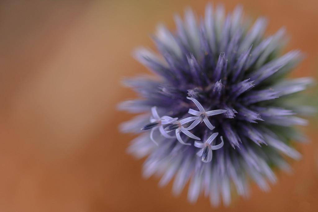 Soft focus by maureenpp
