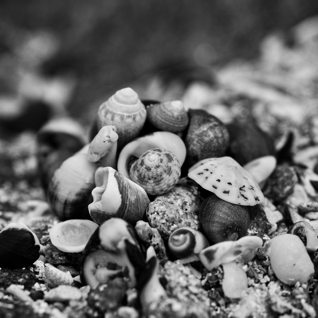 Just Pile Of Shells....P1300804 by merrelyn