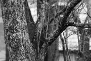 1st Feb 2020 - Tree limbs