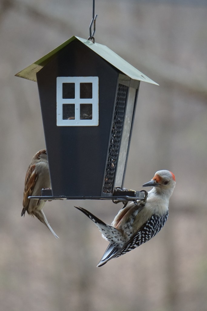 Too big for this feeder by tunia