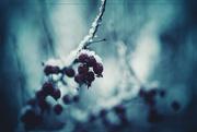 22nd Jan 2020 - Winter in Blues