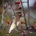 Hungry Bird by mgmurray