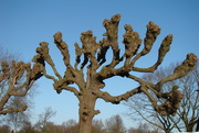 2nd Feb 2020 -  tree with whimsical branches