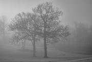 1st Feb 2020 - Morning Fog