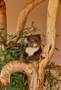 2nd Feb 2020 - Koala