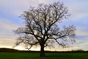 2nd Feb 2020 - Winter Tree