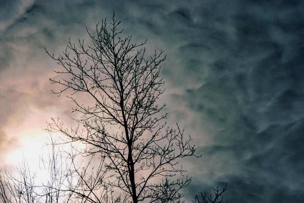 February Words - Sky by farmreporter