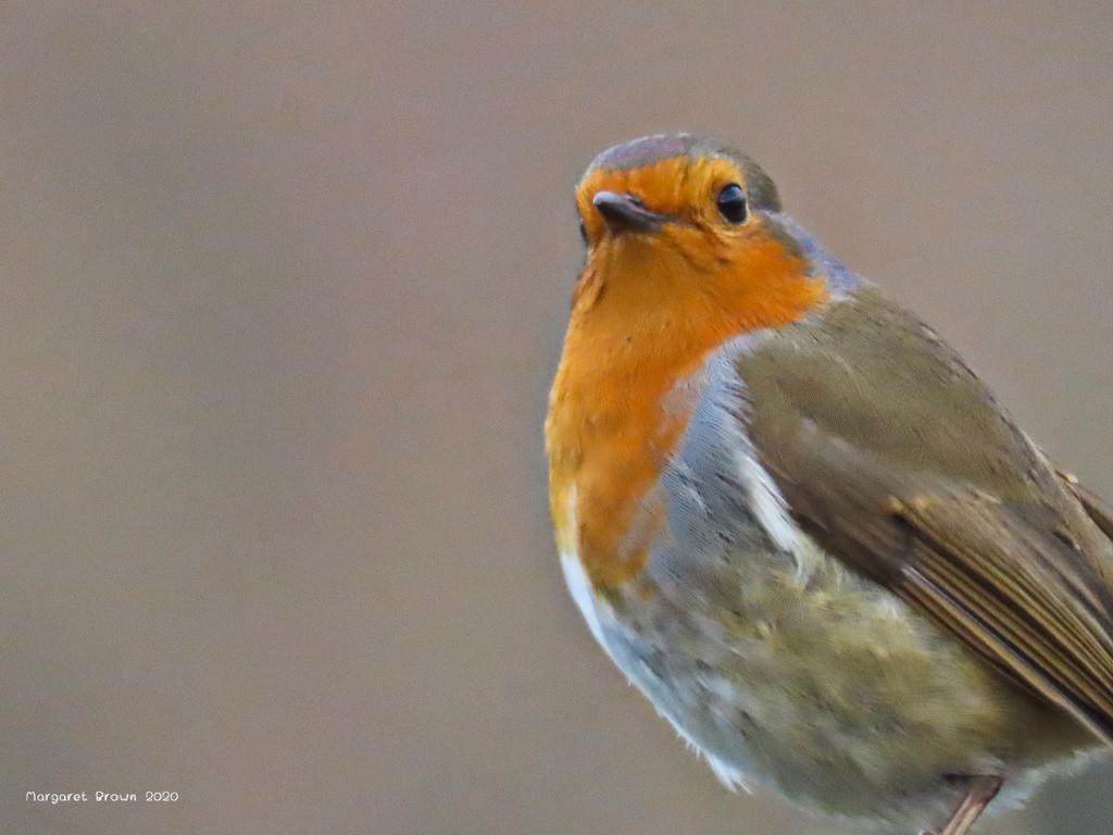 Winter robin by craftymeg