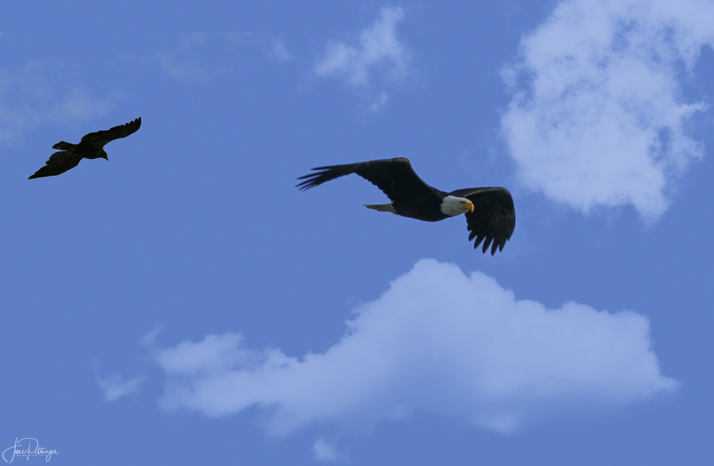 Raven In Pursuit by jgpittenger