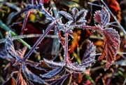 1st Feb 2020 - Frost Makes Cold Days Cheerier