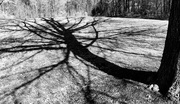 2nd Feb 2020 - Shadow of the Tree 2