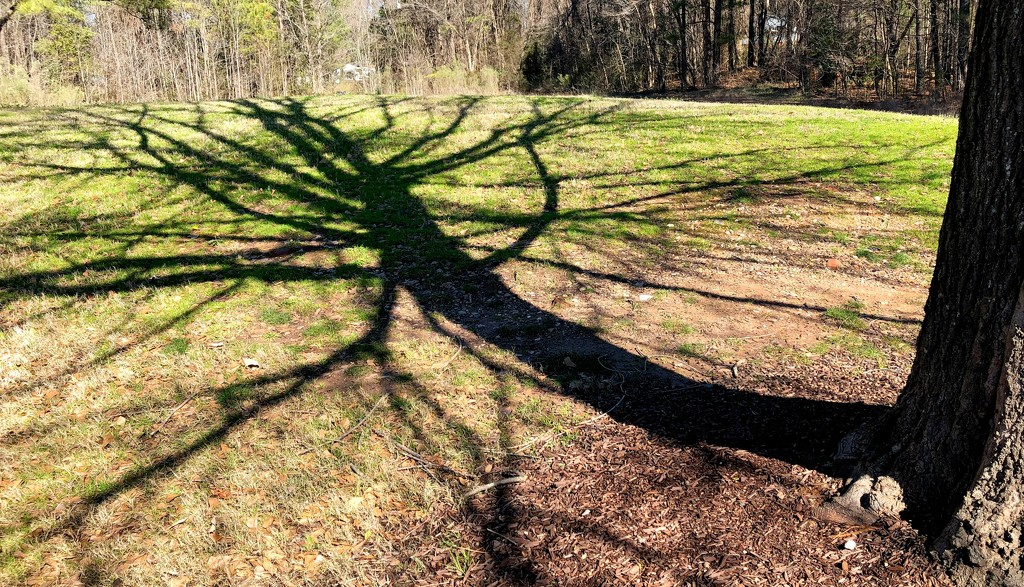 Shadow of the Tree by homeschoolmom