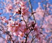 2nd Feb 2020 - Spring bokeh