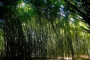2nd Feb 2020 - Bamboo Forest