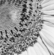 3rd Feb 2020 - Seeds And Petals _DSC9883