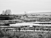 3rd Feb 2020 - 3:  Forms in Nature:  Marshland Pools