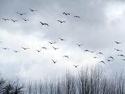 3rd Feb 2020 - Fly Away