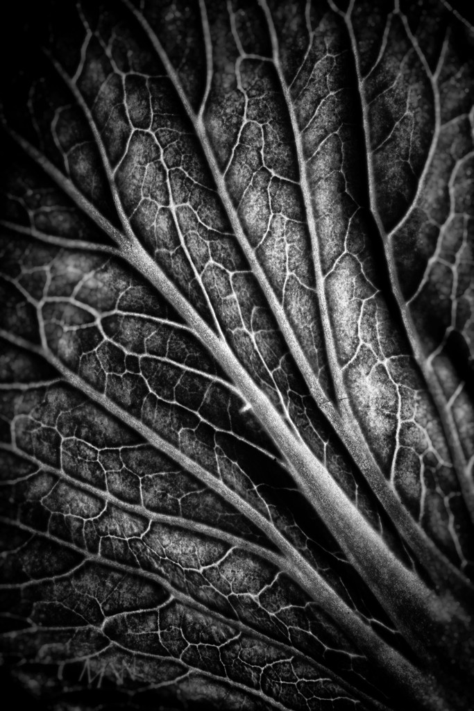 2020-02-03 the veins of life by mona65