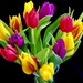The Colours of Spring by carole_sandford
