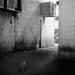 Back alleys wildlife