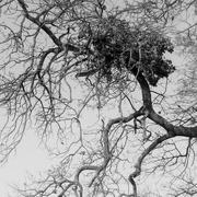 3rd Feb 2020 - Tree nest