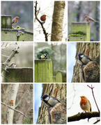 3rd Feb 2020 - A nice stroll to the park today with my camera and someone has been feeding the birds 😁