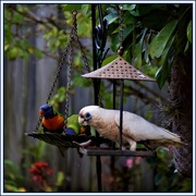 4th Feb 2020 - Welcome Visitor ~