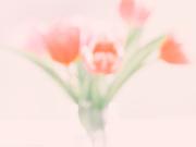 1st Feb 2020 - softly softly