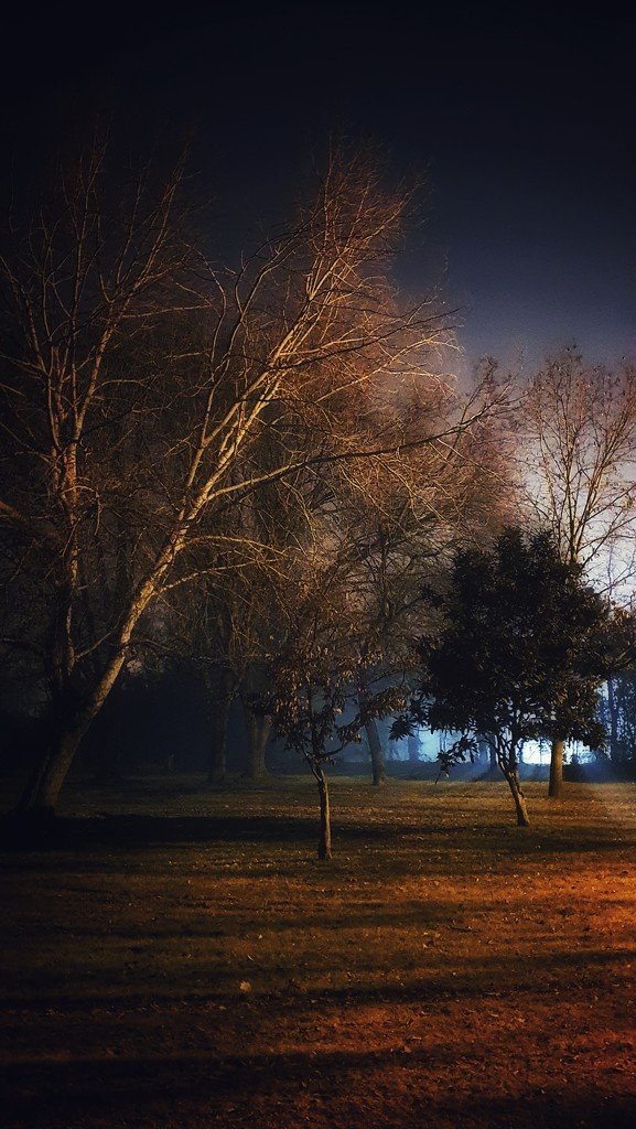 The park at night by spectrum