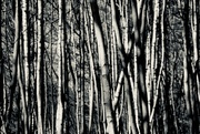4th Feb 2020 - 4:  Forms in Nature:  Forest