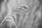 4th Feb 2020 - Misty Droplets