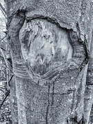 4th Feb 2020 - Watching tree