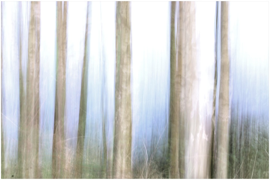 A bit if ICM on our walk yesterday by lyndamcg