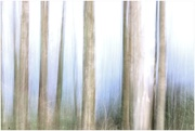 4th Feb 2020 - A bit if ICM on our walk yesterday