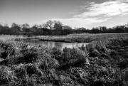 3rd Feb 2020 - Water meadows....