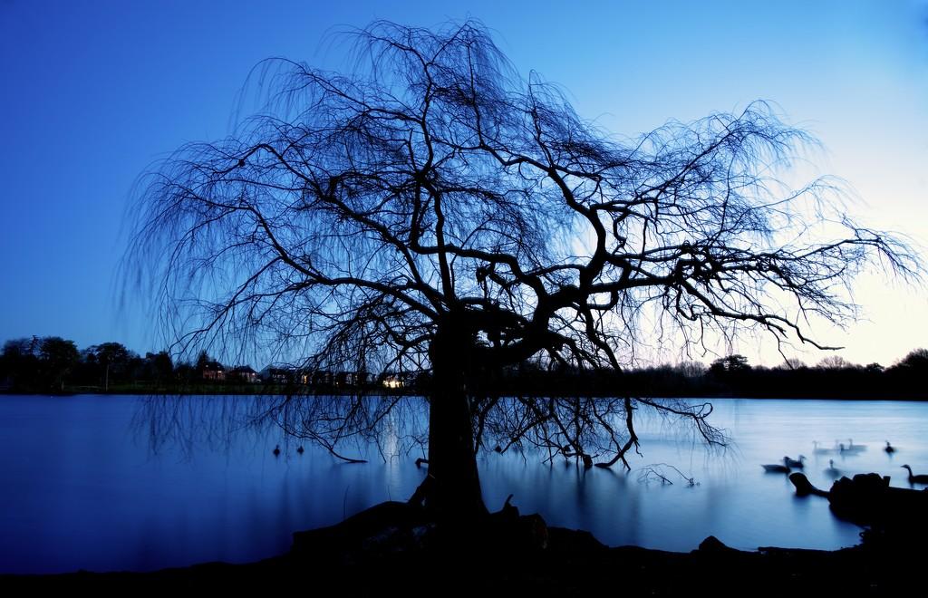 The Skeleton Tree by moonbi