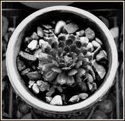 5th Feb 2020 - A succulent in a pot