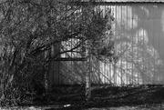 4th Feb 2020 - Lilac Shadows